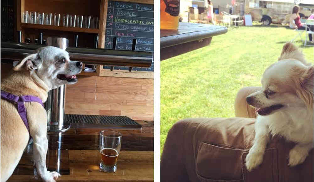 Dog Friendly Drinking Spots