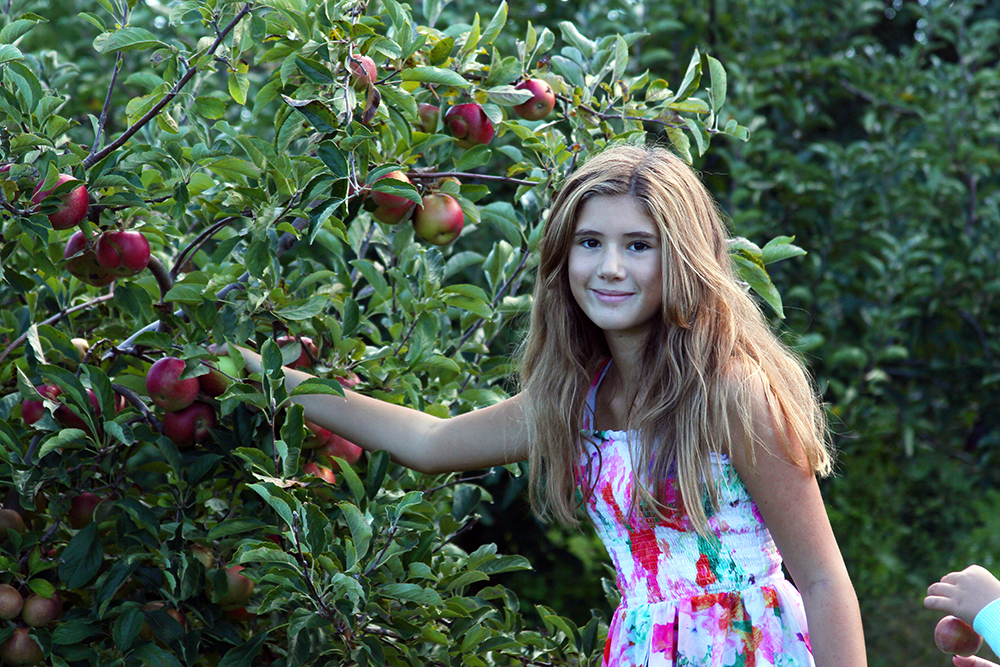 Apple Picking Time!