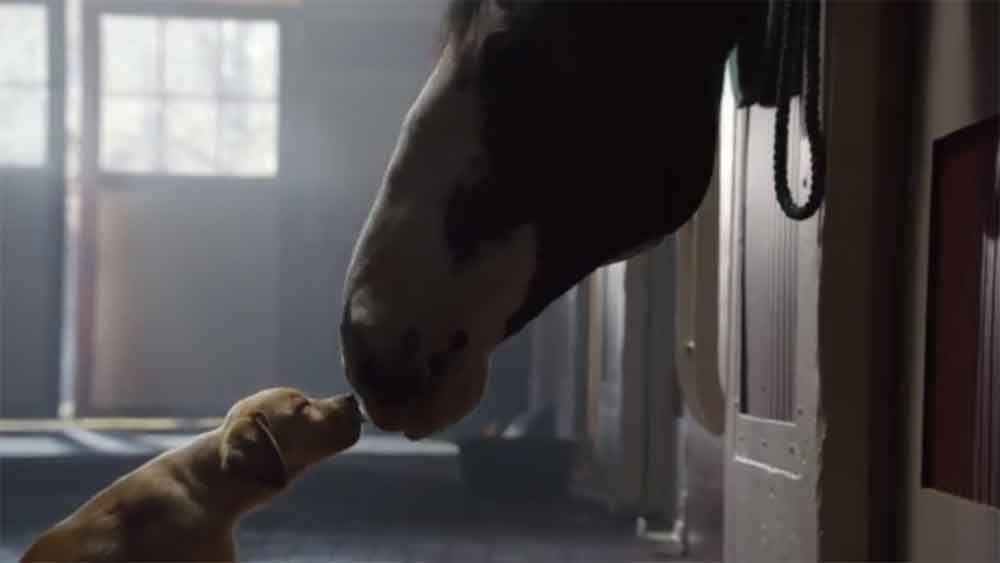 "Budweiser's ""#BestBuds"" Ad is Melting Hearts Already"