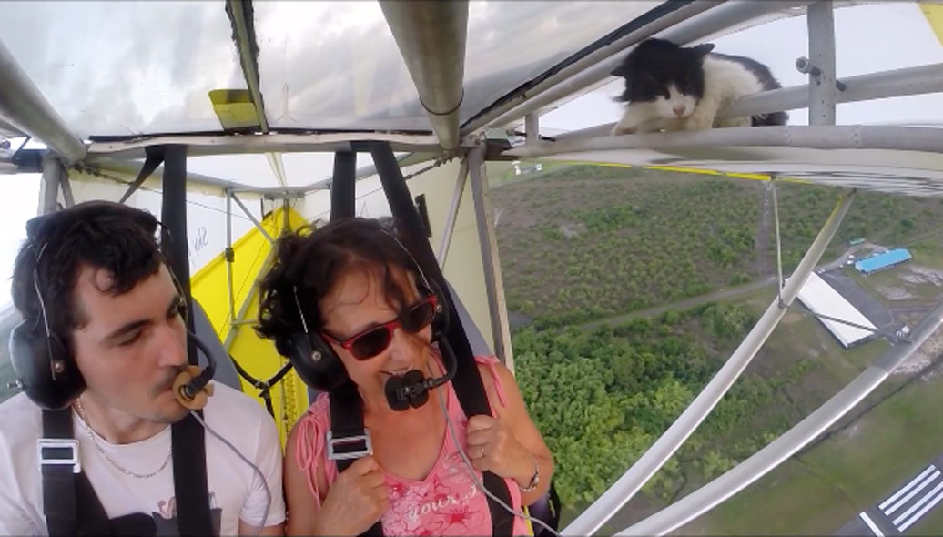 Always Remember to Remove Your Cat Before Flight
