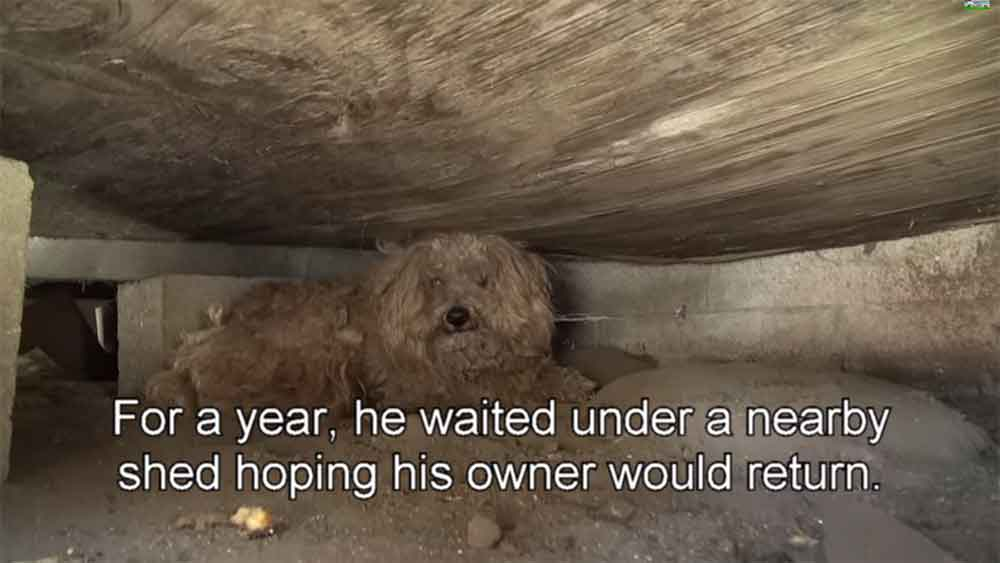 This Dog's Owner Died and He Was Left Behind for a Year