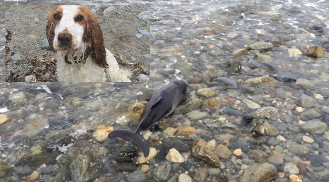 Man And His Dog Save Baby Dolphin Stranded On Beach