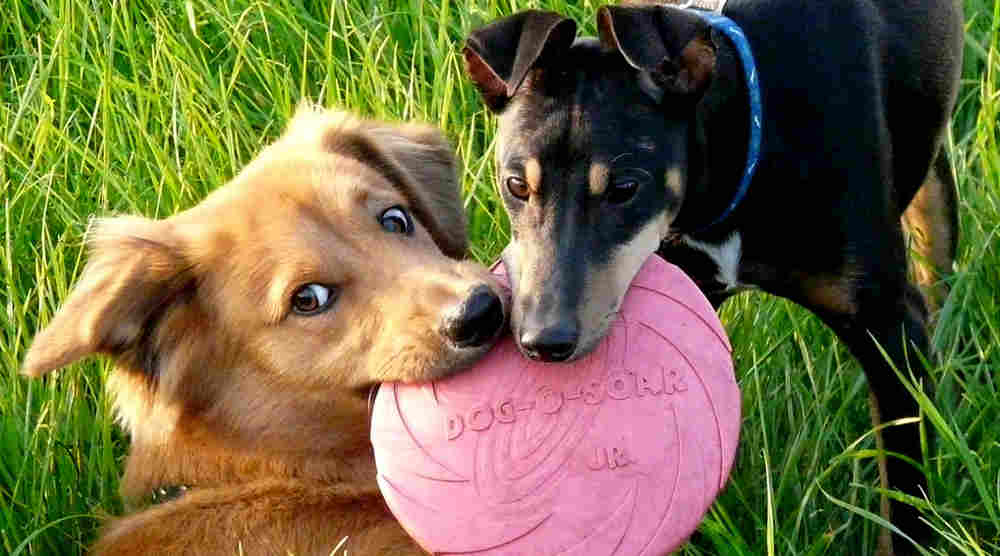 Cure Your K9's Spring Fever at These LI Dog Parks