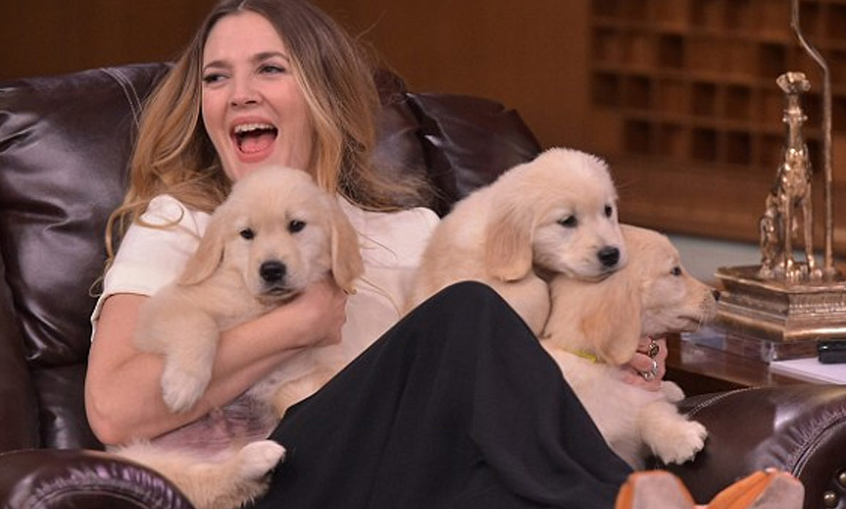Another Game Of Pup Quiz This Time With Drew Barrymore