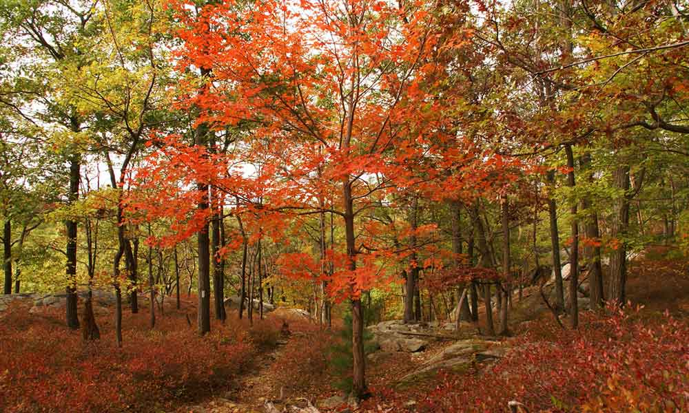 4 Places to See Fall Foliage