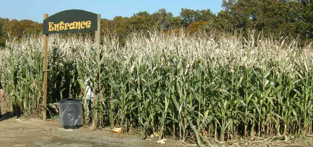 4 North Fork Corn Mazes To Explore This Fall
