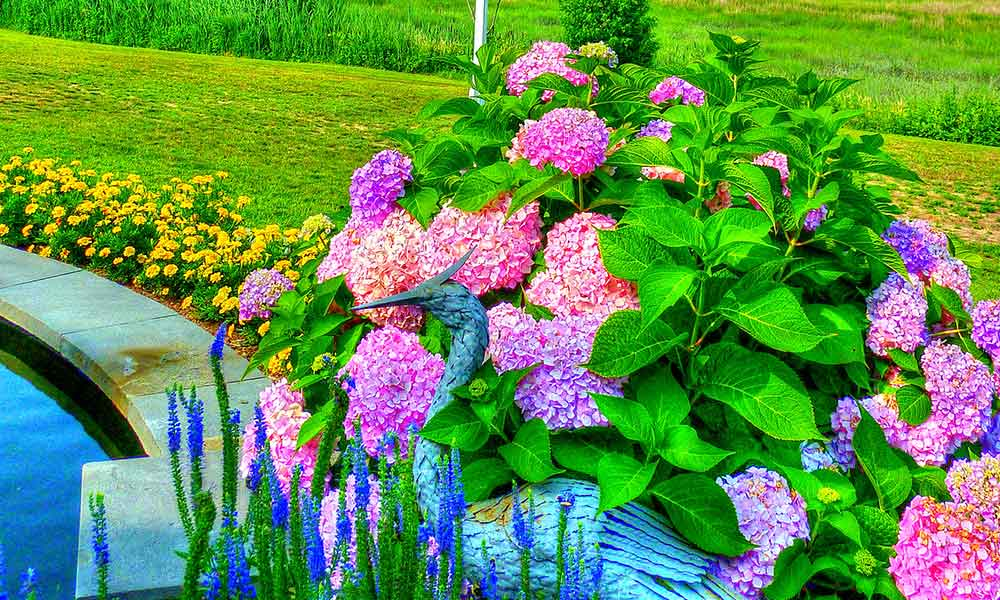How to Plant a Hamptons Garden