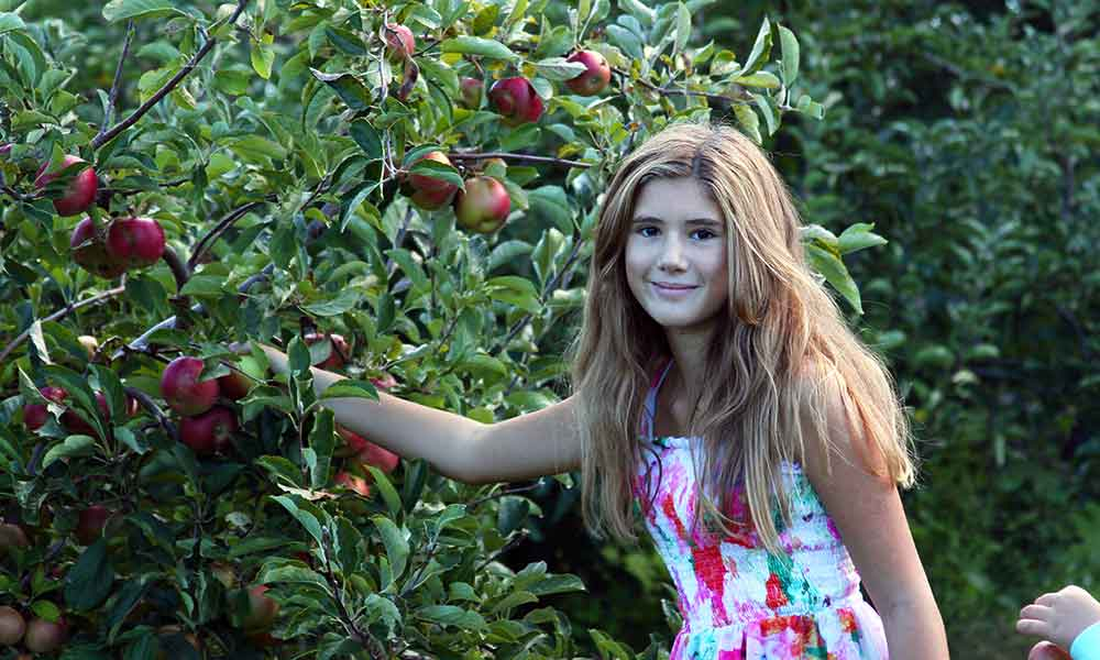 It's Apple Picking Time on the East End