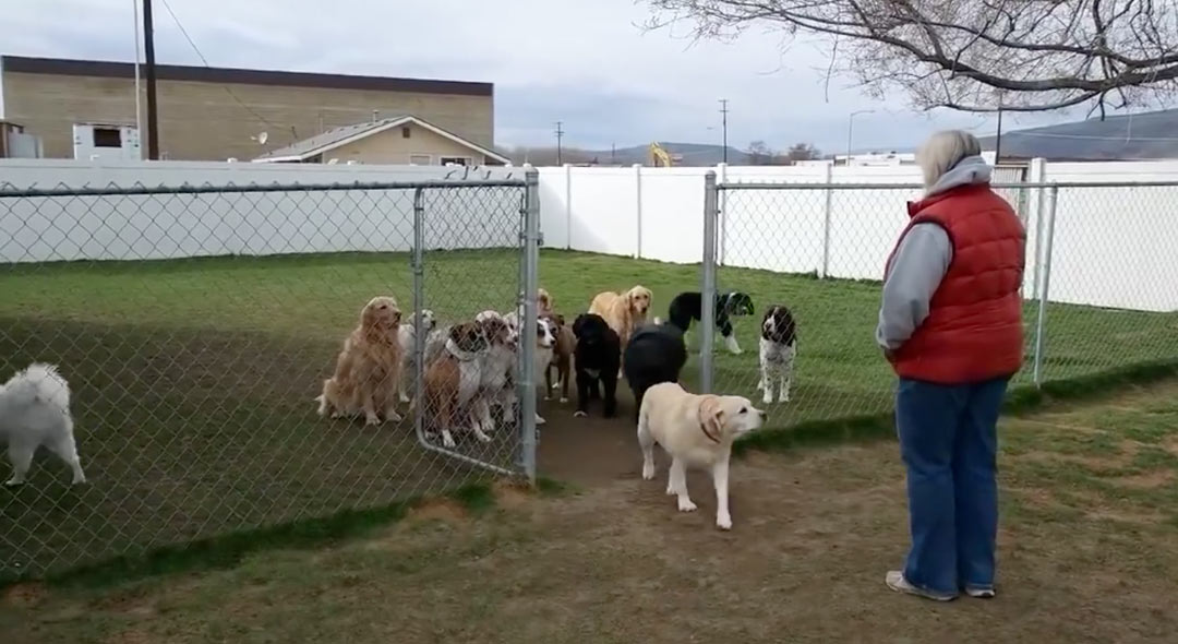 These Dogs Patiently Wait For Their Names To Be Called Out Before They Eat.