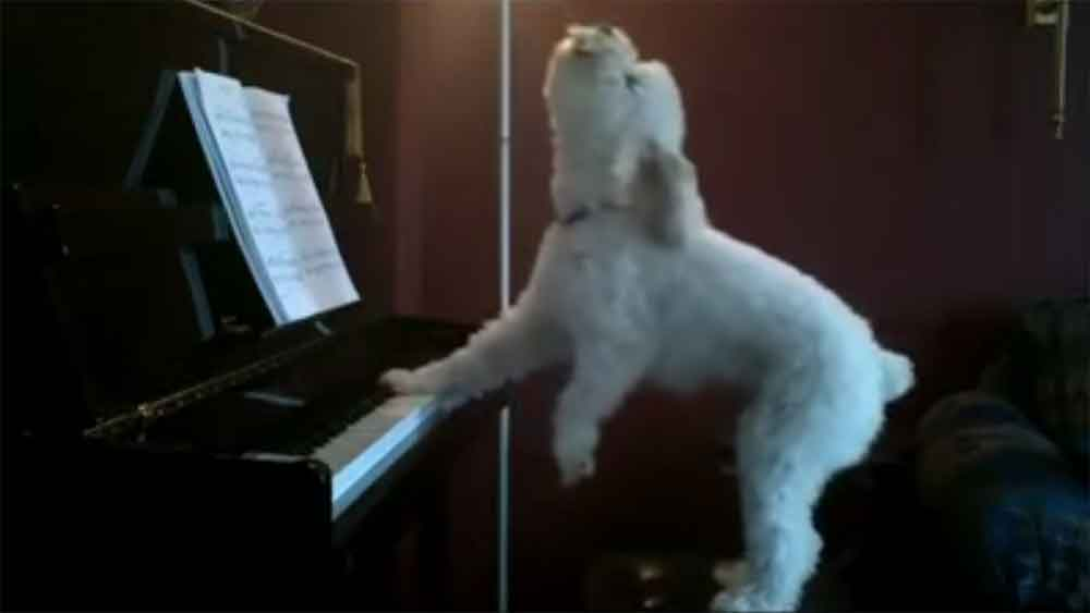 Meet Barky Joel, the Piano Playing Singing Dog!