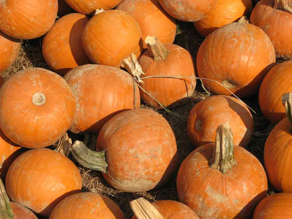 3 Great North Fork Pumpkin Patches
