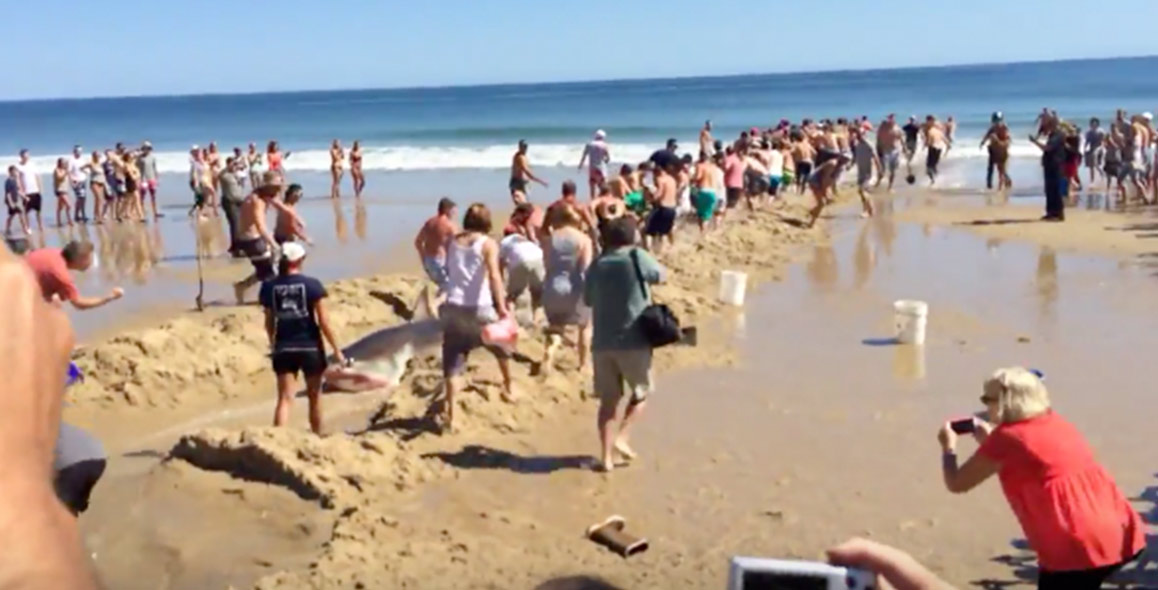 Great White Shark Rescue Attempt on Cape Cod